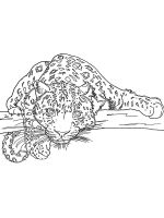 Irbis-coloring-pages-11