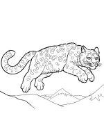 Irbis-coloring-pages-2