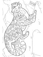 Irbis-coloring-pages-3