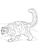 Irbis-coloring-pages-4