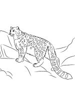 Irbis-coloring-pages-7