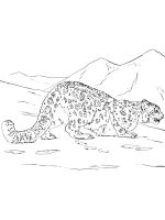Irbis-coloring-pages-8