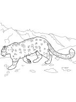 Irbis-coloring-pages-9