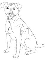 Jack-Russell-Terrier-coloring-pages-1