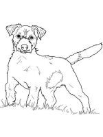 Jack-Russell-Terrier-coloring-pages-6