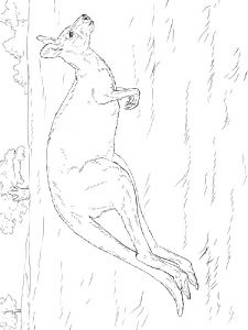 Kangaroo-animal-coloring-pages-344