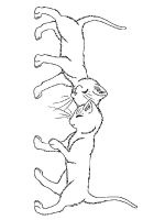 Kitten-coloring-pages-22