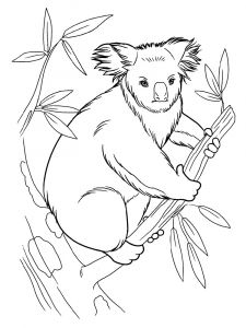 Koala-animal-coloring-pages-335