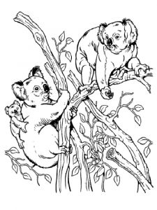 Koala-animal-coloring-pages-336