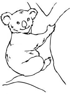 Koala-animal-coloring-pages-341