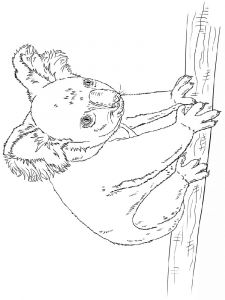 Koala-animal-coloring-pages-343