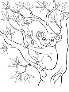 Koala-animal-coloring-pages-347