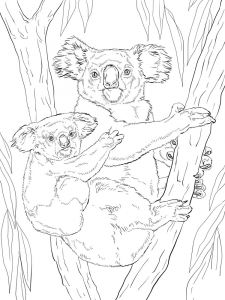Koala-animal-coloring-pages-348