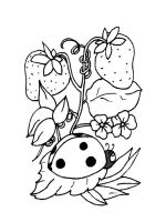 Ladybug-coloring-pages-3