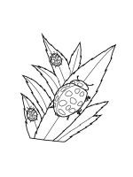 Ladybug-coloring-pages-40