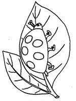 Ladybug-coloring-pages-8