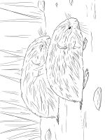 Irbis-coloring-pages-1