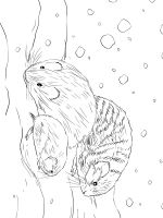 Irbis-coloring-pages-5