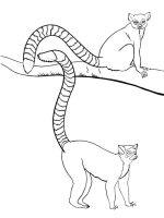 Lemur-coloring-pages-11