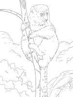 Lemur-coloring-pages-3