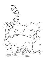 Lemur-coloring-pages-4
