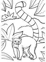 Lemur-coloring-pages-6