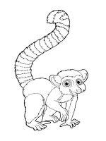 Lemur-coloring-pages-7