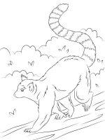 Lemur-coloring-pages-8