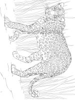Leopard-animal-coloring-pages-335