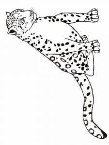 Leopard-animal-coloring-pages-342