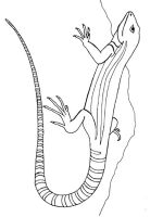 Lizard-coloring-pages-1