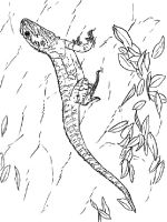 Lizard-coloring-pages-3