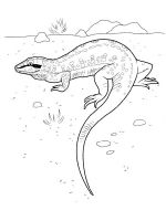 Lizard-coloring-pages-6