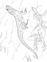 Lizard-coloring-pages-7