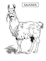 Llama-coloring-pages-5