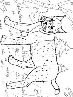 Lynx-animal-coloring-pages-336