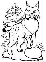 Lynx-animal-coloring-pages-338