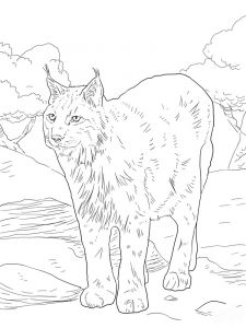 Lynx-animal-coloring-pages-340