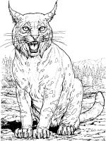 Lynx-animal-coloring-pages-341