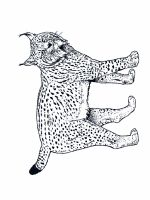 Lynx-animal-coloring-pages-342