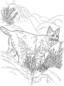 Lynx-animal-coloring-pages-344