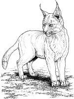 Lynx-animal-coloring-pages-345