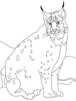 Lynx-animal-coloring-pages-346