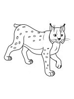 Lynx-coloring-pages-2