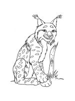 Lynx-coloring-pages-3