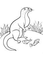 Mongoose-coloring-pages-5