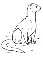 Mongoose-coloring-pages-7