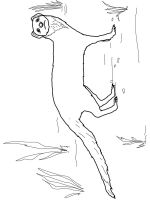 Mongoose-coloring-pages-8