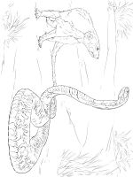 Mongoose-coloring-pages-9