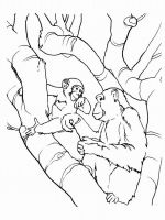 Monkey-animal-coloring-pages-335